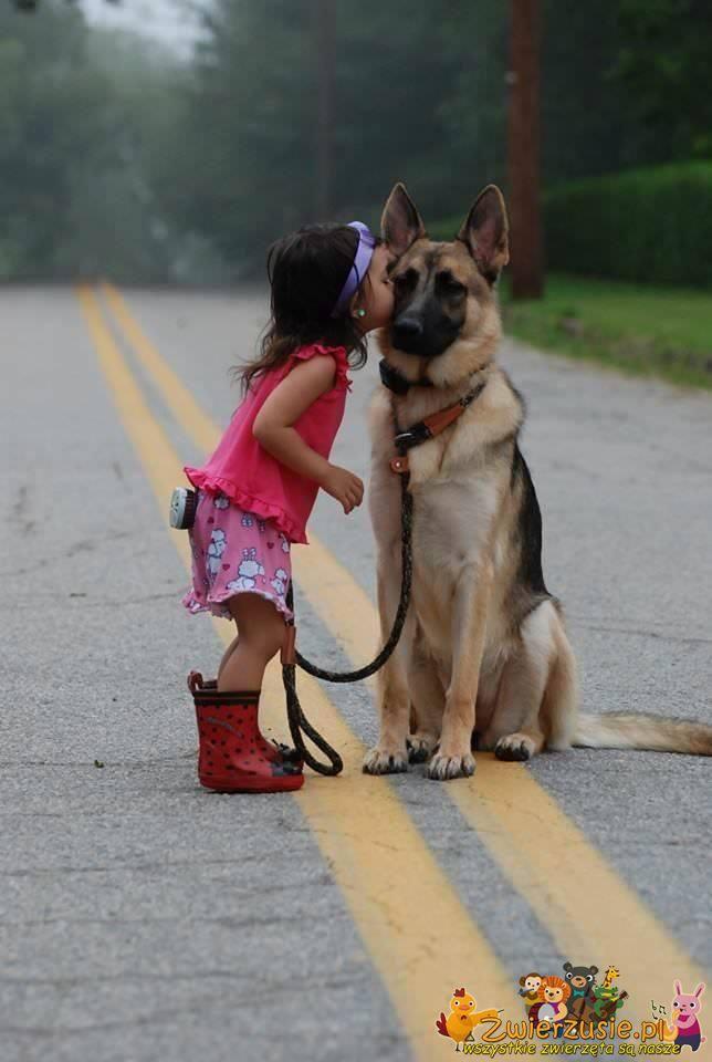 Owczarek i dziewczynka