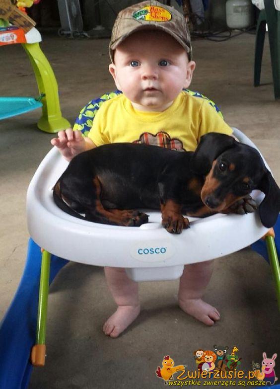 Jamnik i dziecko