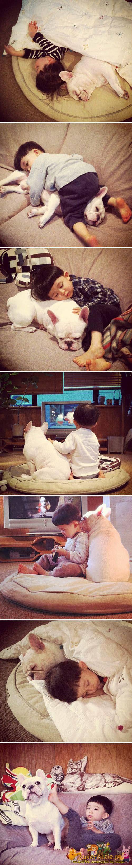 Buldog i dziecko