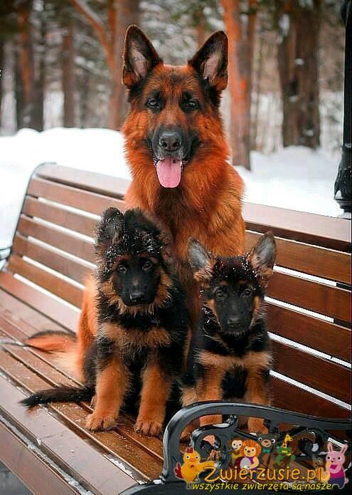 Rodzina Owczarków