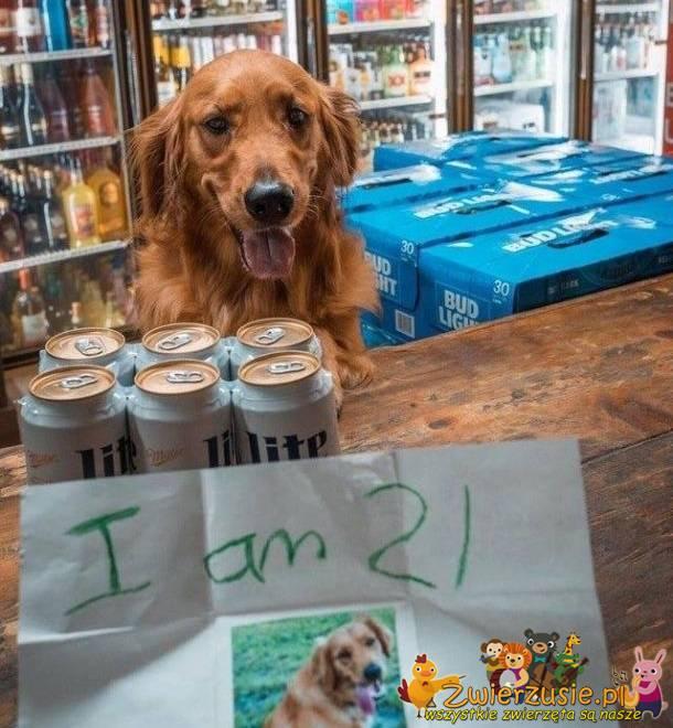 Zakup piwa
