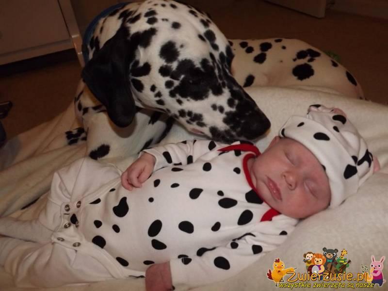 Dalmatyńczyk i dziecko
