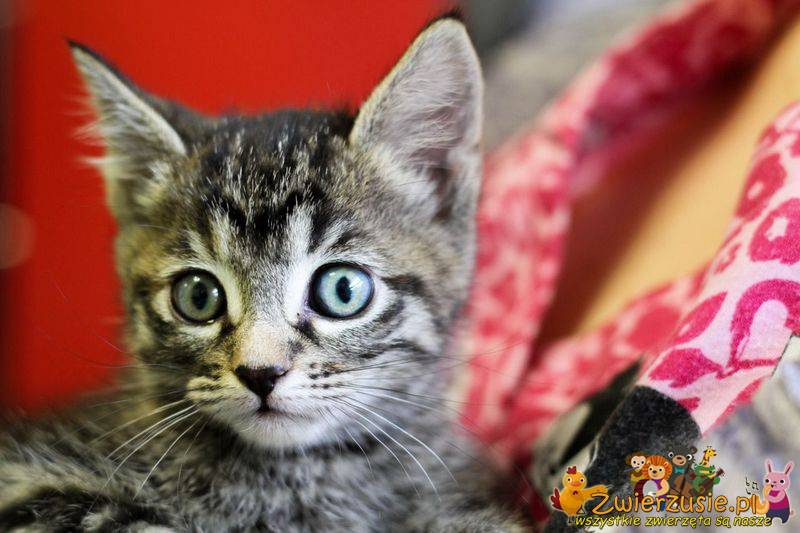 Zamyślony kotek