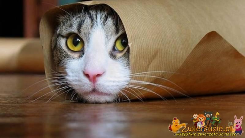 Kot w papierze