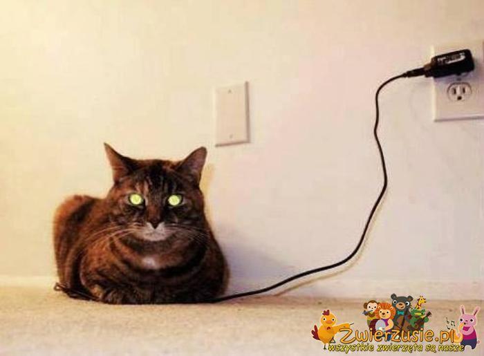 Kot pod ładowarką