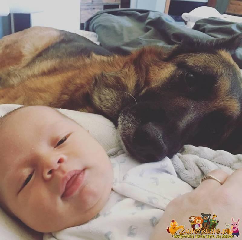 Owczarek i dziecko
