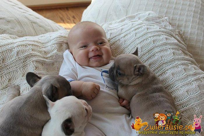 Buldogi i dziecko