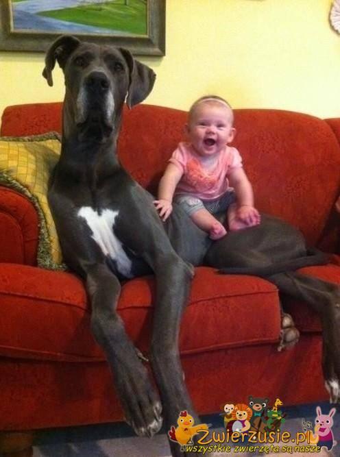 Dog jako opiekunka
